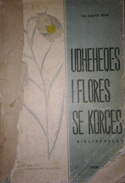 Udheheqes I Flores se Korces I (Dialipetalet)